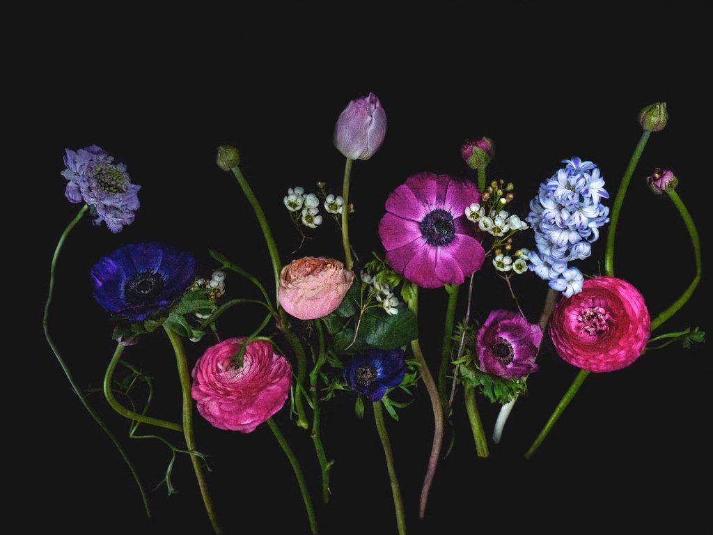 Bloemportret met voorjaarsbloemen, hyacint, ranonkel, anemonen, tulpen in roze en blauw