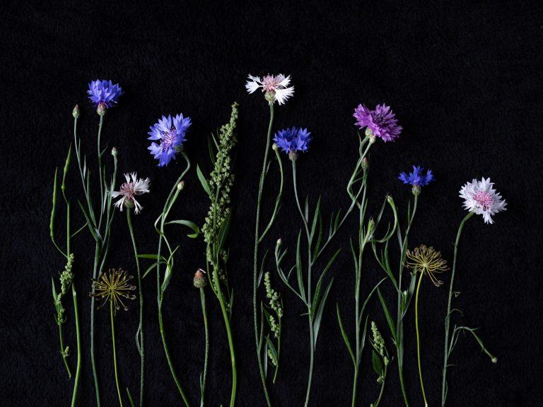 Flattlay van tere bloemen