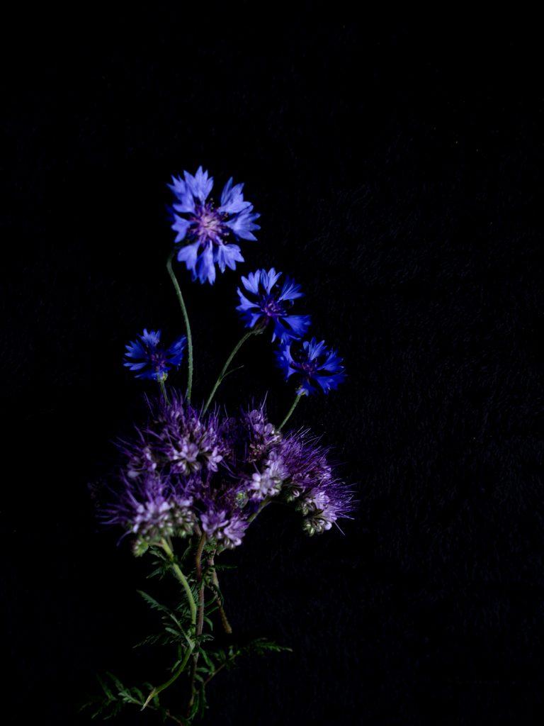 Bloemportret met blauwe korenbloemen