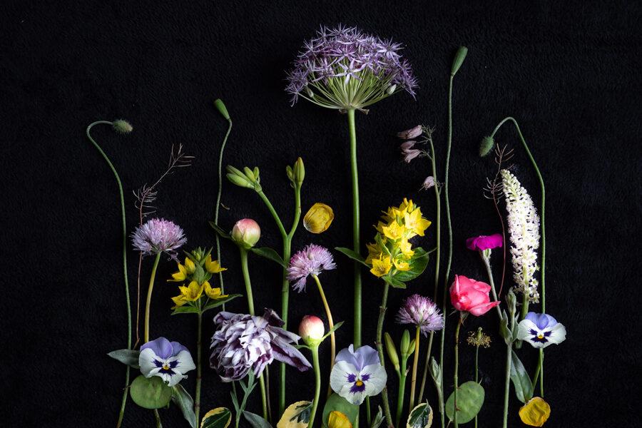 Bloemportret, flatlat in lila, geel