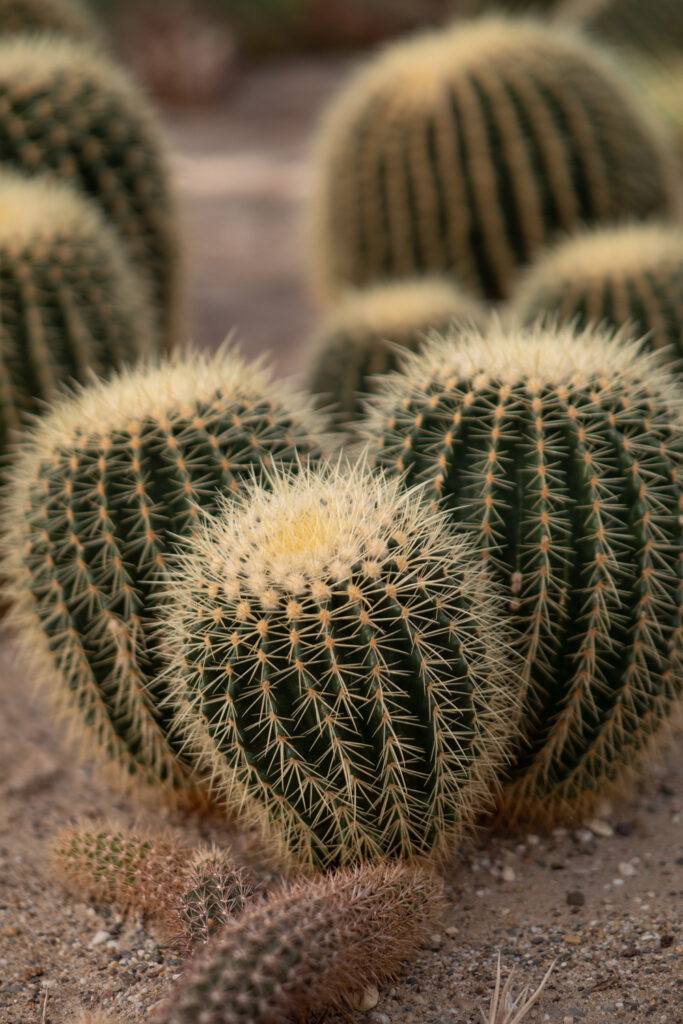 Cactus Oase