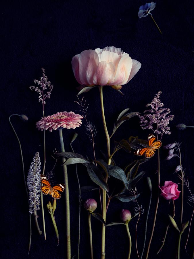 Bloemportret Pioen- Wall Flower